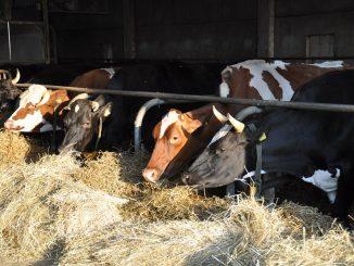 Разведение КРС на мясо и молоко как бизнес