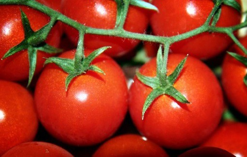 Выращивание помидоров в теплице и их сбыт