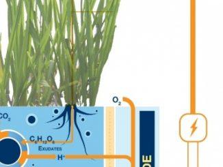 Электричество из земли - зеленая энергия Plant-e