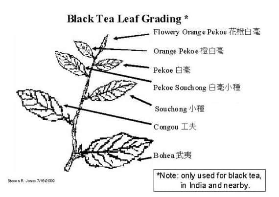 Пример классификации листьев