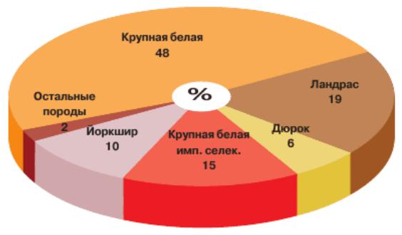 Основные породы свиней, разводимые в племенных хозяйствах России