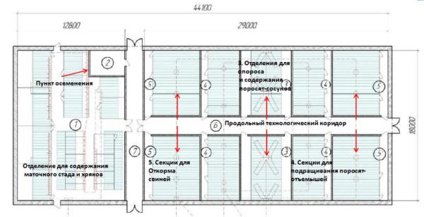 Размеры и планировка помещения для откорма 1 000 свиней при трехфазной бесстрессовойтехнологии по рекомендациям В.И. Базыкина, А.В. Трифонова