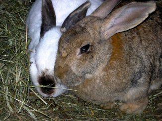 Кролиководство или как открыть кроличью ферму