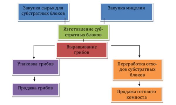 Технологическая схема выращивания грибов на промышленной основе