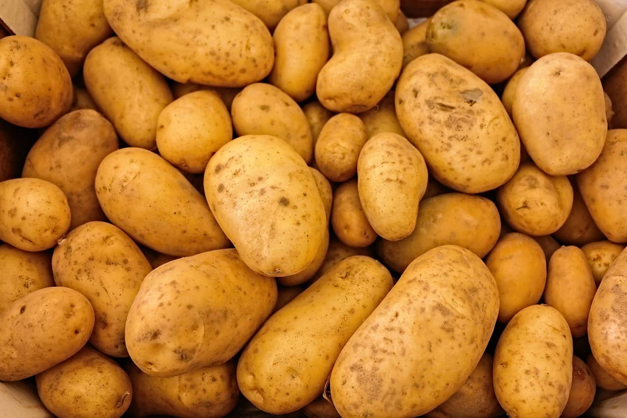 Как выращивают картофель в промышленных масштабах
